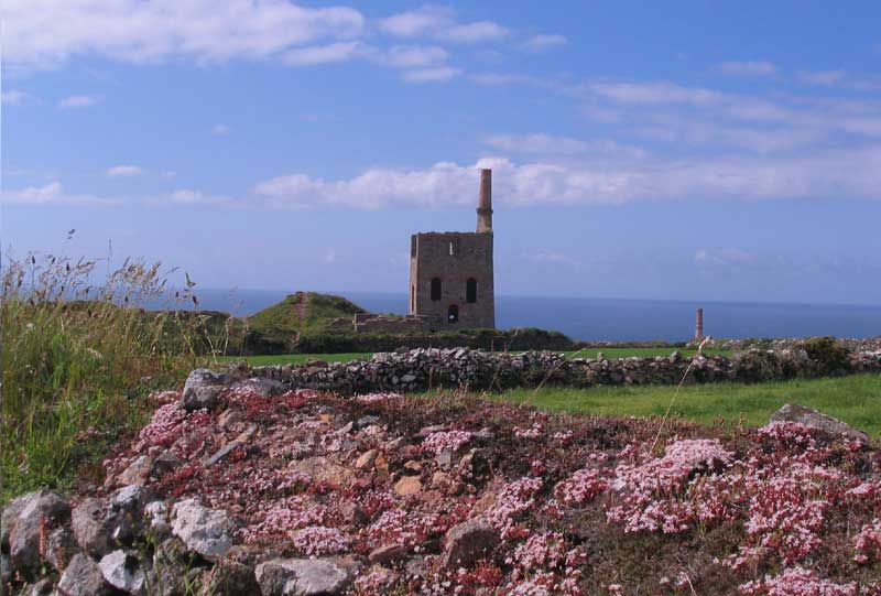<br>Higher Bal, Levant Mine. Engine house for dual purpose pumping and winding engine. Stonecrop in foreground., Penwith Local History Group